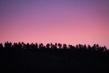 Papiers peints Rose banbon Forêt au couché du soleil