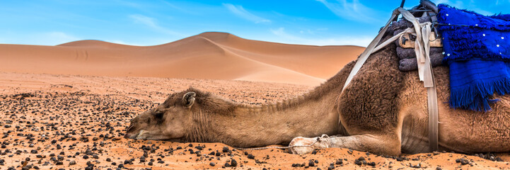 Fototapeten Lachs Merzouga in the Sahara Desert in Morocco. Web banner in panoramic view.