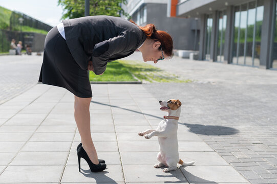 Business woman in a jacket, skirt and high heels is training a puppy of Jack Russell Terrier on the street. The girl walks with a small dog outdoors. Playing with your pet outside on a warm summer day