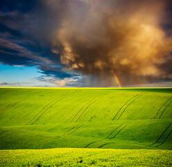 Wall Mural - Vivid green field of fresh wheat on the springtime. Location place of Ukrainian agrarian region, Europe.