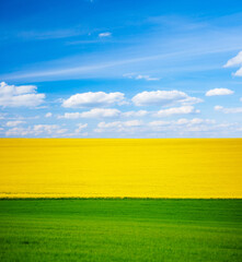 Wall Mural - Abstract image of a spring field that is divided into colored sectors.