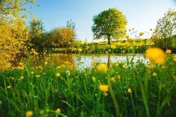 壁紙(ウォールミューラル) - Spring meadow with tree on the edge of the shore. Location place river Seret, Ukraine.