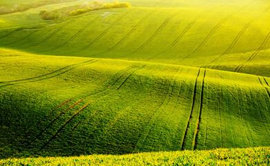壁紙(ウォールミューラル) - Fantastic view on of sunlit wavy fields of agricultural area. Location place of South Moravia region, Czech Republic.