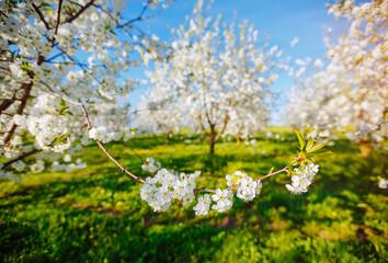 壁紙(ウォールミューラル) - Attractive ornamental garden with blooming lush trees in idyllic sunny day.