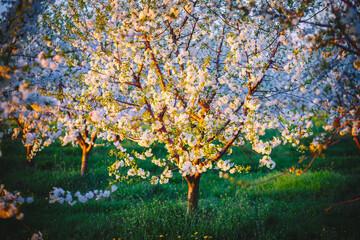 壁紙(ウォールミューラル) - Incredible ornamental garden with blooming lush trees in idyllic sunny day.