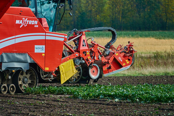 Red Maxtron beet harvester from German production at work and harvesting on the field near Gifhorn, Germany, October 19., 2019