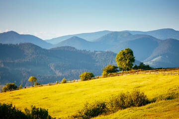 Wall Mural - Idyllic sunny day in tranquil mountain landscape. Location place of Carpathian mountains.