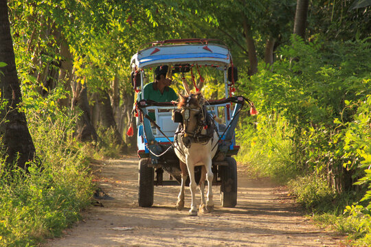 Cidomo horse cart with driver and no tourists