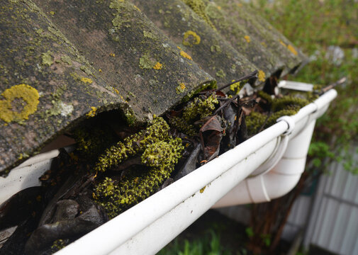 Clogged roof gutters and downspout with old leaves, dirt, moss and lichen causes roof leaks and damages the house.