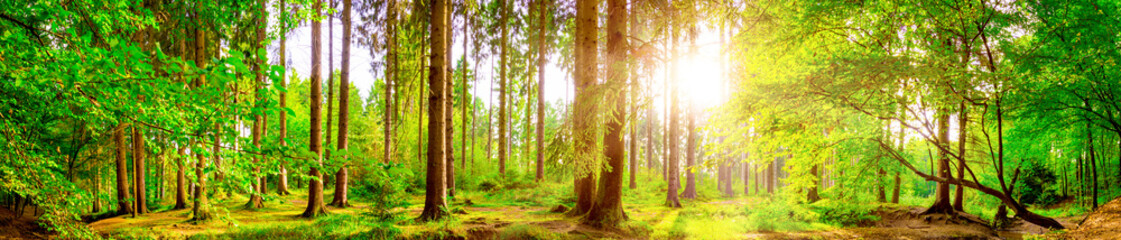 Poster Landscapes Forest panorama with bright sun shining through the trees