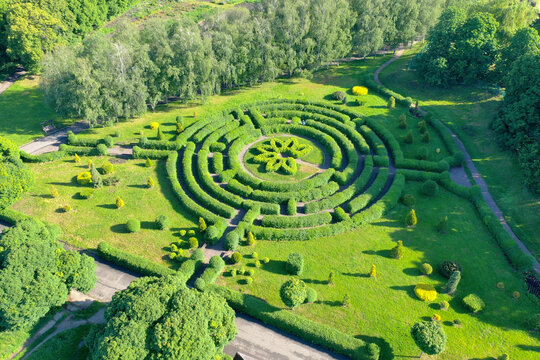 Aerial shot of Green hedge maze in a botanical garden. Landscaping in a nature park. Lush vegetation of bright green color.