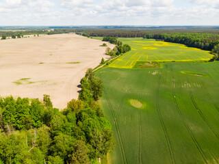 Pole pola droga wiosna rolnictwo wieś uprawy zboże drzewa