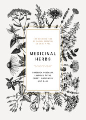 Vintage medicinal herbs card or invitation design. Hand-drawn flowers, weeds, and meadows illustrations. Summer plants template with golden foil borders. Herbs outlines