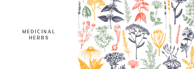 Hand-drawn medicinal herbs banner design in color. Wildflower, weed, and meadow sketches. Vintage summer plants template. Herbs outlines