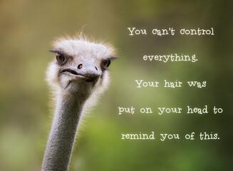 Obraz Ostrich having a bad hair day - fototapety do salonu