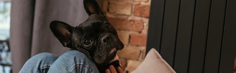 website header of black french bulldog near girl in living room Fotobehang