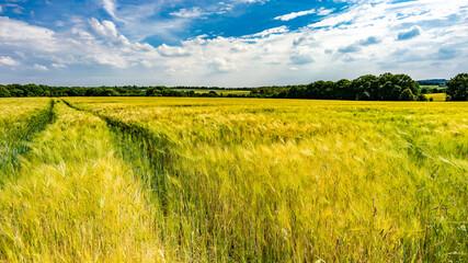 Landschaft im Sommer mit Himmel und Wolken und Weizen Kornfeld Fotoväggar