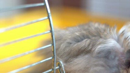 Fototapete - hamster in a cage