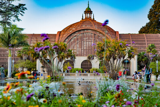 The Lily Pond at Balboa Park, San Diego, California.