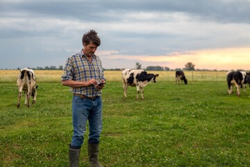 A mature male shepherd is using a smart phone for send messages and make calls while gathering cows used for biological milk products industry on a green pasture lawn of a countryside farm.