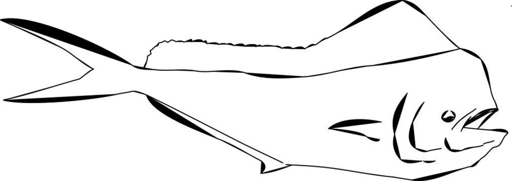 Mahi Mahi fish or dolphin fish outline