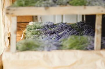 Obraz Suszenie lawendy na powietrzu w słońcu - fototapety do salonu