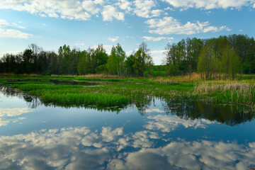 Fotobehang - Spring or summer day on the lake and swamps in the forest. Wonderful wildlife landscape.
