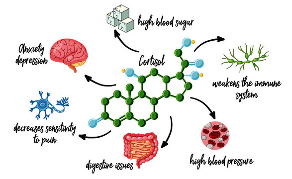 cortisol and functions infographic