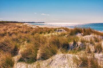 Wall Mural - Landschaft in den Dünen an der Ostseeküste auf dem Fischland-Darß