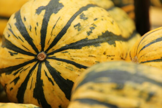 pumpkins with stripes and texture