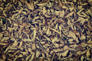 Carpet of Dried Leaves in Autumn background, Vintage Style.