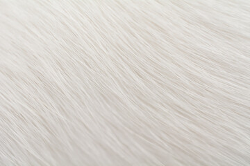 Close-up, Macro View of Animal White Fur. Abstract Texture Background.