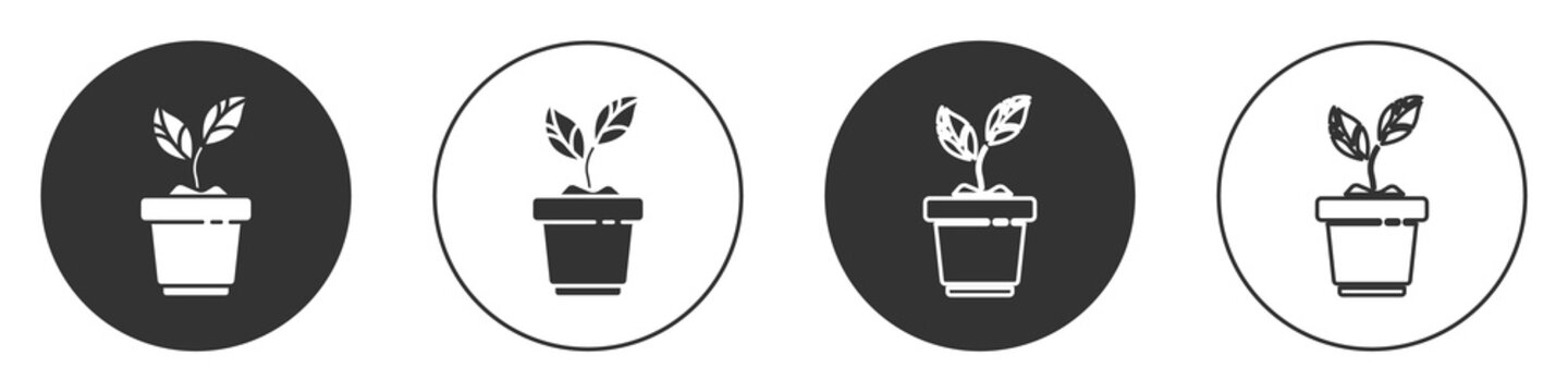Black Plant in pot icon isolated on white background. Plant growing in a pot. Potted plant sign. Circle button. Vector Illustration.