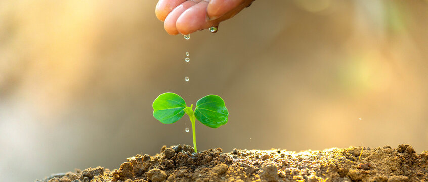 Environment day concept. Drop water on hand for growing tree. Protect the environment. Renewable energy for future. Global warming concept. Sustainable resources background for web banner.