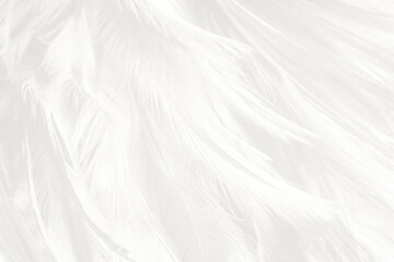 Wall Mural - Beautiful white feather wooly pattern texture background