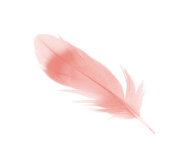 Wall Mural - Beautiful light pink feather isolated on white background