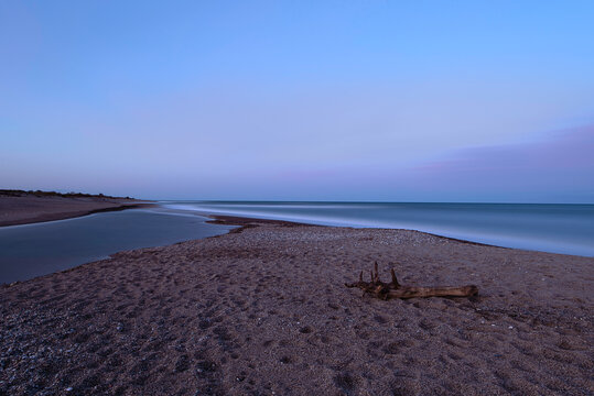 bois flotté à la plage de la Marende