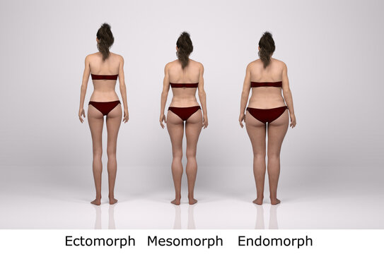 3D Render : standing female body type illustration : ectomorph (skinny type), mesomorph (muscular type), endomorph(heavy weight type), Back View