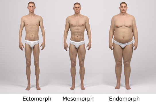 3D Render : the portrait of standing male body type : ectomorph (skinny type), mesomorph (muscular type), endomorph(heavy weight type) , Front View