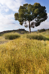 Landscape in Monforte del Cid in spring, Alicante province in Spain.
