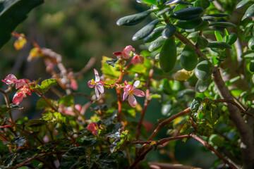 Fototapeta pink and white flowers
