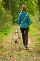 junge Frau geht im Frühling mit Hund im Wald spazieren - Whippet, Windhund 3 Jahre alt