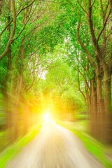 Motion blurred rural dirt road and green woods landscape.