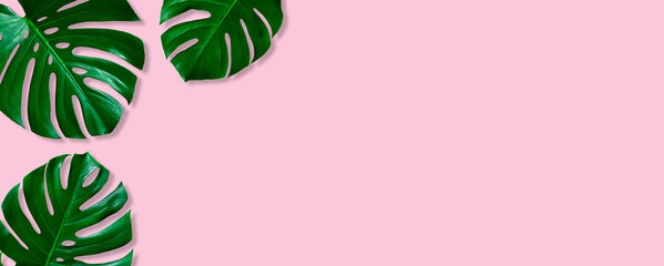 Wall Mural - Green leaves nature frame layout of tropical plant bush (monstera, palm, philodendrons) on pastel pink background, flat lay