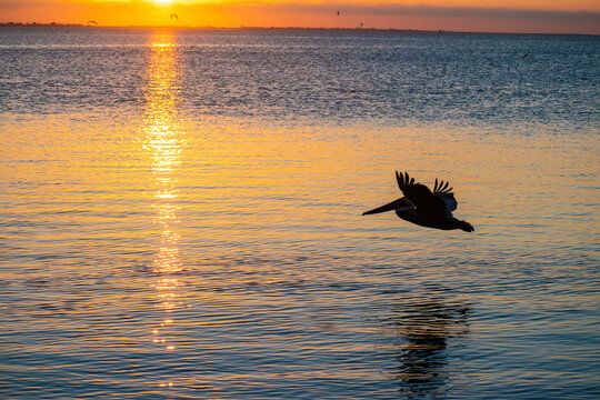 A Pelican Sunset on South Padre Island