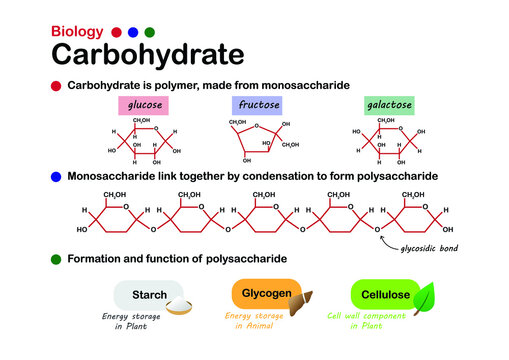 Biology diagram show structure and formation of carbohydrate, made from sugar, monosaccharide and function of starch, glycogen and cellulose.