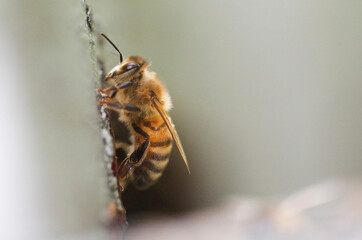 A bee is seen near its beehive in Chaudron-en Mauges