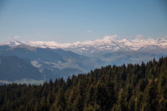Wide forest and snowy mountains