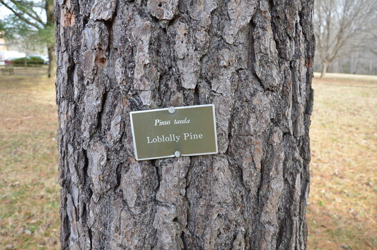 sign on loblolly pine tree and brown tree bark on trunk