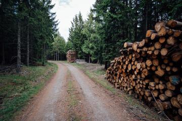 Wanderweg führt durch einen dunklen Wald. Am Wegesrand gestapeltes Holz der Forst